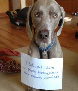 Dog_Shaming_pic