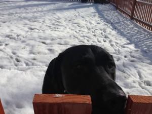 Hurley Snow 022014