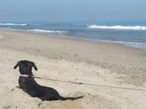 Lola puppy beach